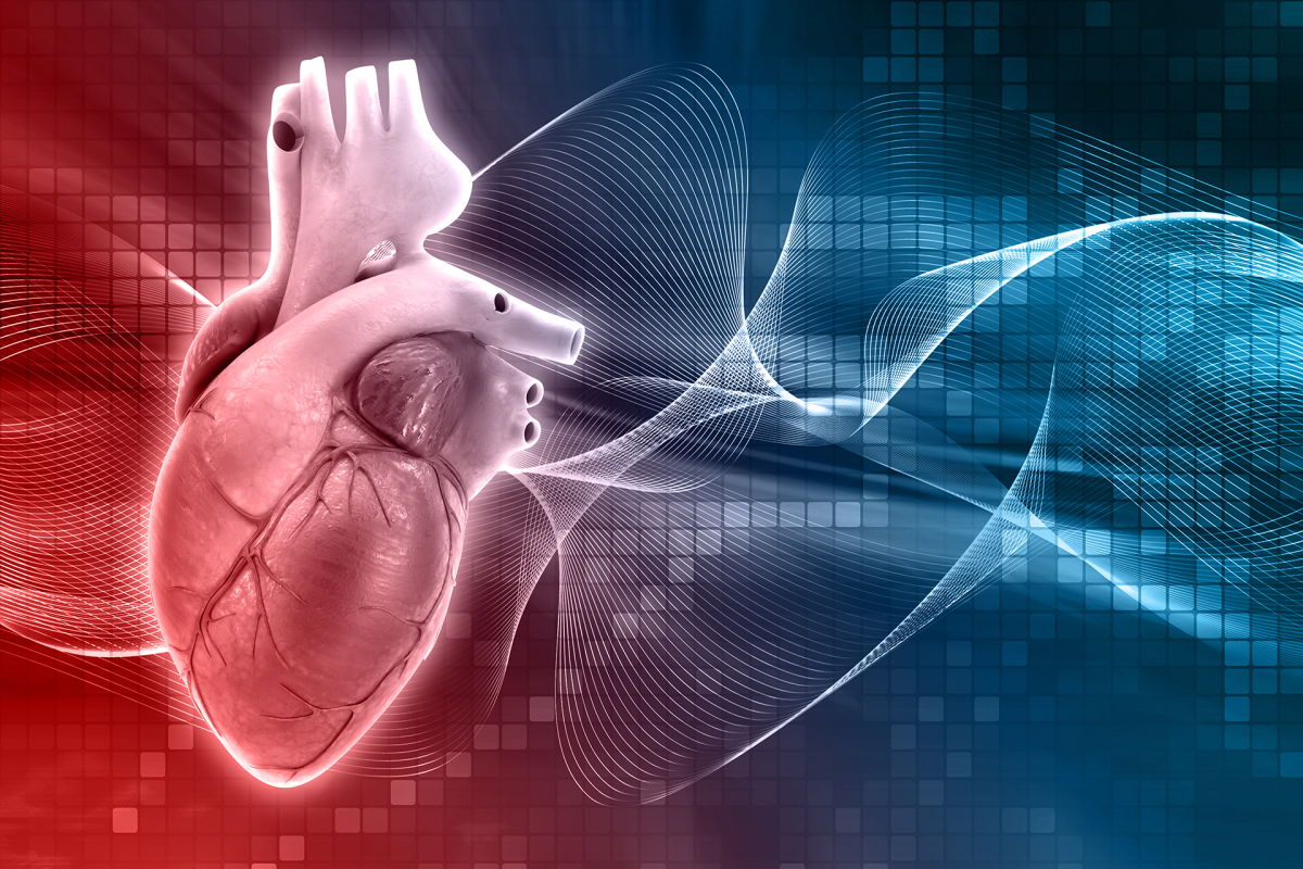 Coração artificial funciona como o de um humano