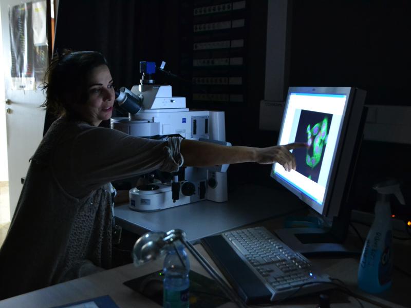 Seeing is believing: uma vida de olhos postos no microscópio