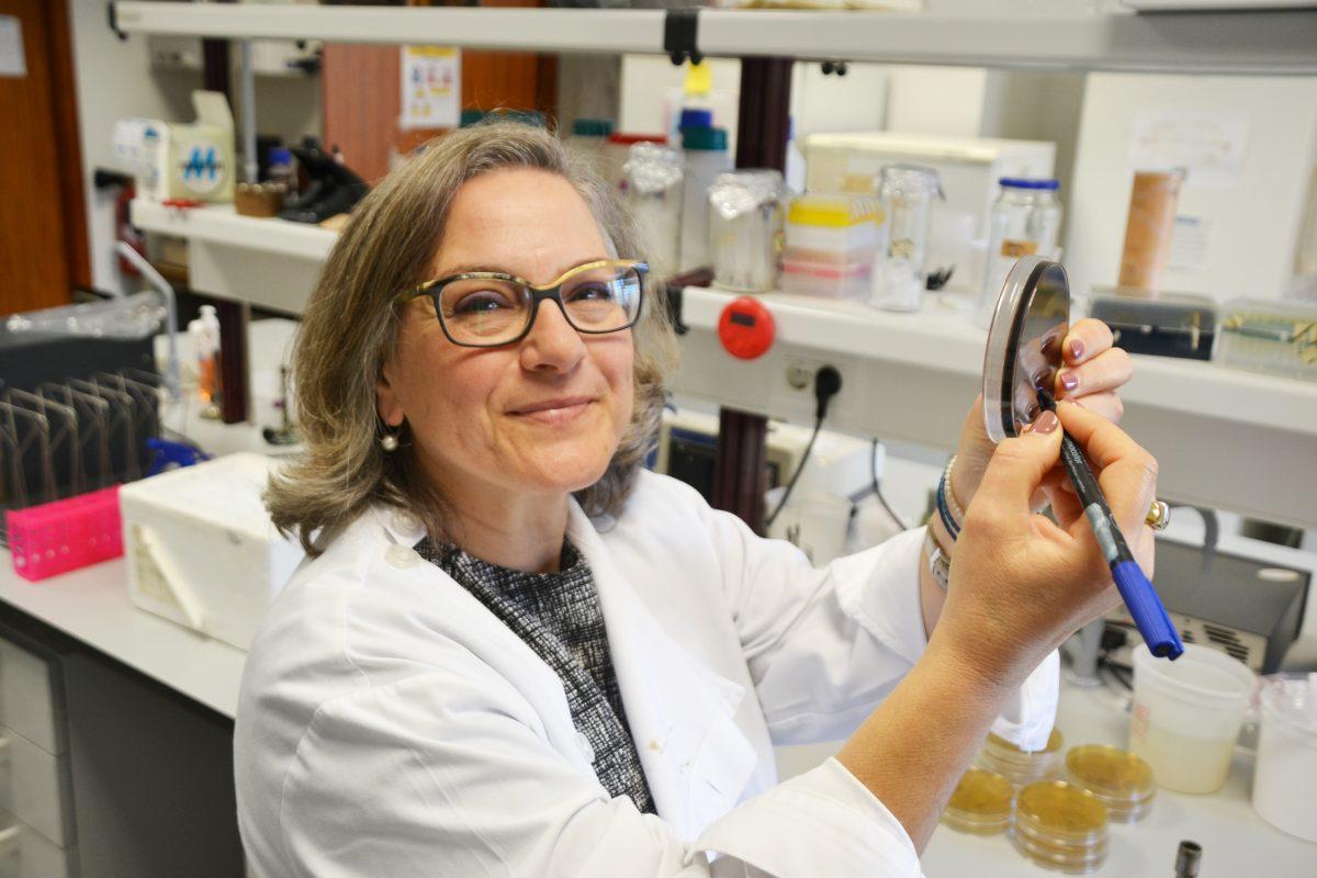Bactérias: O micromundo de Leonor (e também o nosso)