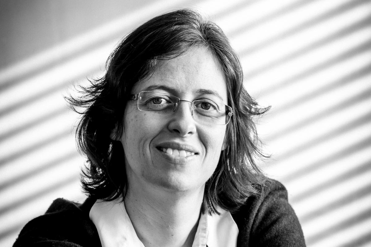 Divisão de bactérias desvendada por investigadores portugueses