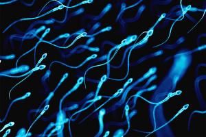 Descoberta proteína que torna cromossomas compatíveis após a fertilização