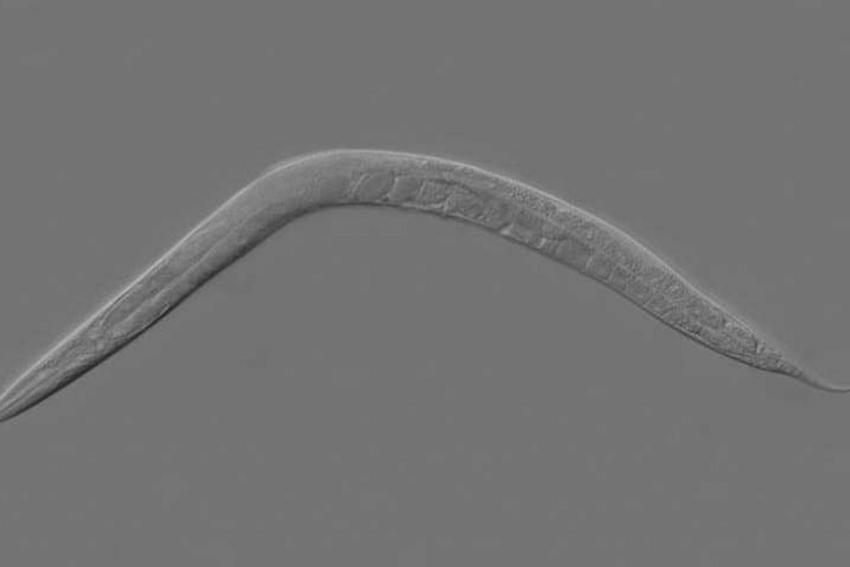 Esperma do pai pode transmitir importante memória epigenética
