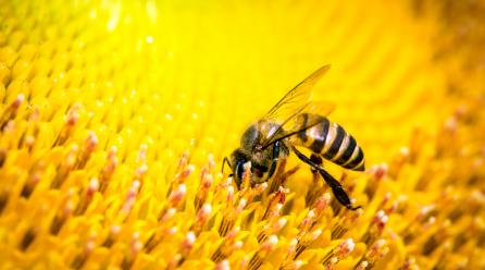 Se a abelha se extinguisse o Homem teria apenas mais 4 anos de vida